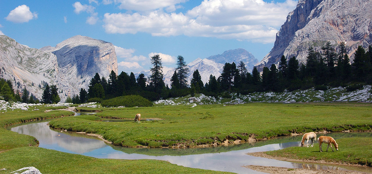 Grazing horses at a crook on an Alpine meadow